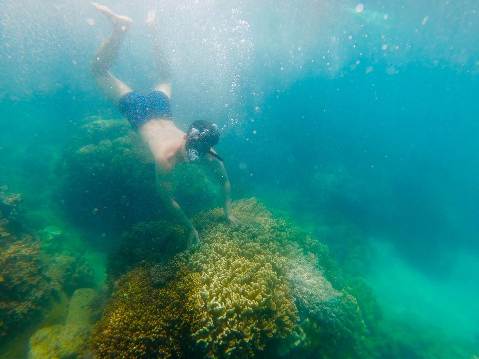 san hô ở đảo cù lao xanh